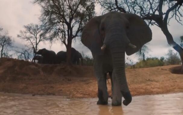 带你去南非看非洲大象